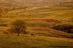 Photo by Scott Bean. Fall in the Flint Hills Kansas Day, Flint Hills, People Art, Painting Inspiration, Natural Beauty, Fall, Autumn, Beans, Country Roads