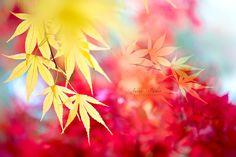 Autumn Gold  Macro photo by JackyParker http://rarme.com/?F9gZi