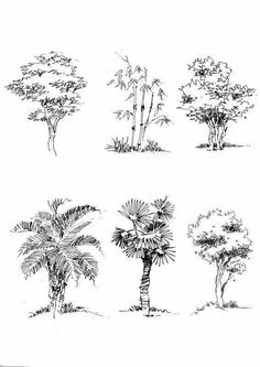 (architectural trees perspective) Plant Sketches, Tree Sketches, Drawing Sketches, Pencil Drawings, Art Drawings, Drawing Ideas, Sketch Ink, Sketch Ideas, Landscape Architecture Drawing