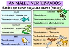 Los animales se pueden clasificar en dos grandes grupos: los vertebrados e…