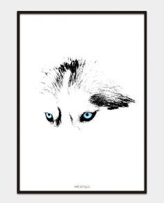 Husky Eyes A3 poster from Fredstegn @livingsweetliving