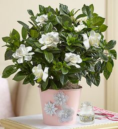 26 best 1800flowers coupon images on pinterest 800 flowers floral 1800flowershopping coupon code fandeluxe Images