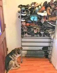 Funny Pictures Of The Day Funny Animal Memes, Funny Animal Videos, Funny Dogs, Funny Animals, Dog Memes, Videos Funny, Funny People Pictures, Funny Photos, Funny Images