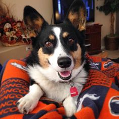 Ellie Mae is a happy Corgi! Submitted...
