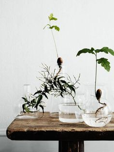 Faire germer des arbres dans des vases transparents