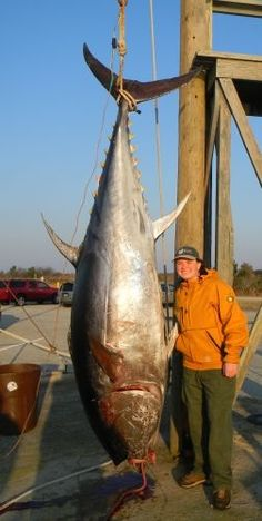 Giant Bluefin Tuna Skiligal Charters Fishing Reports | Skiligal Sportfishing