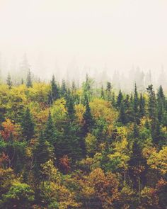 Image discovered by Bee. Find images and videos about nature, forest and october on We Heart It - the app to get lost in what you love. Good Vibe, All Nature, Urban Nature, Nature Quotes, Amazing Nature, Pics Art, Ereri, Graphic, Beautiful World