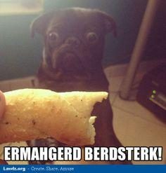 ermahgerd-animals-berdsterk-breadstick-funny-meme.jpg 513×537 bildpunkter