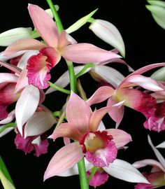 Phaius Micro Burst by David in SWGA, via Flickr