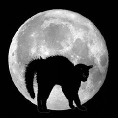 ellenzee.tumbler.com  (via Myxer - Wacked Wallpapers - Black cat in full moon - Screensaver)