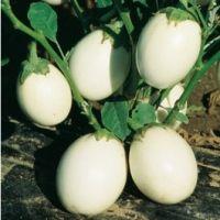 Newsletter 104 di Coltivare l'orto. Le semine di novembre, anche con il calendario lunare, I lavori di novembre. Coltivare la rucola, le cip...