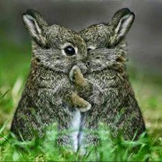 Bunny secrets.