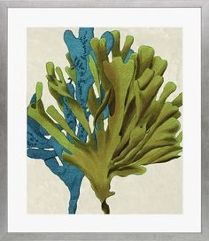 'Multicolored Seaweed' Framed Graphic Art