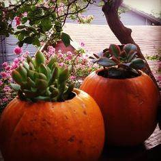 #DIY succulents planted in pumpkins