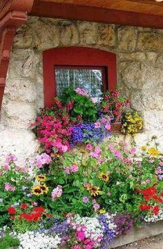 Flowers+– Сообщество– Google+