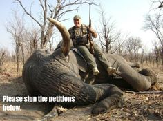 """JUST SAY """"NO WAY"""" To  Elephant Safari Hunting In ZAMBIA!  On 21st August 2014 the Zambia Minister of Tourism and Arts reversed the ban on elephant hunting. Given the massive decline in the elephant populations of Africa this APPALLING decision is SHEER MADNESS! PLEASE SIGN AND SHARE WIDELY!  http://www.thepetitionsite.com/197/038/111/no-elephant-safari-hunting-in-zambia/?taf_id=12549878&cid=fb_na"""