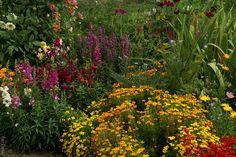Georgíny (Dahlia),papuľky (Antirhinum), aksamietnice (Tagetes), vrbica (Lythrum), krasuľka (Cosmos), kráska (Coreopsis), nechtík (Calendula), šalvia ohnivá (Salvia)