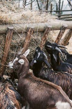 5 der schönsten Hofläden im Rhein-Main-Gebiet - Rhein-Main-Blog Maine, Rhein Main Gebiet, Horses, Blog, Animals, Inspiration, Farm Shop, Day Trips, Wiesbaden