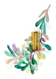 'Gilbert's Banksia' .I'll let the people of Torquay work out where I thieved this one from Australian Wildflowers, Australian Native Flowers, Australian Art, Watercolor Landscape, Watercolor Flowers, Watercolor Paintings, Watercolours, Natalie Martin, Botanical Art