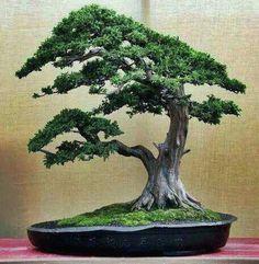♦♦Some #bonsai inspiration for the day!ᴥ♣       #BonsaiInspiration