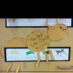 Ants life cycle art next, then finally Classroom Art Projects, Science Classroom, Art Classroom, Plant Science, Science Fair, Pre K Lesson Plans, Life Cycle Craft, First Grade Science, Magic School Bus