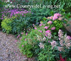 Теневыносливые и тенелюбивые растения, цветник в тени. Мой сад, июль 2007: гортензия садовая, астильбы, морозник, герань садовая, манжетка