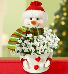 Frosty the Snow Plant :)