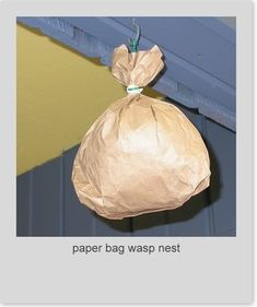 """Paper bag wasp nests - to keep the wasps away. Fill the paper bag with plastic bags and make it look """"nest like"""". This will deter wasps from making a nest in the same area."""