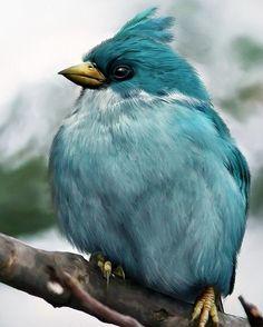 Beautiful Bird - he has a beautiful color
