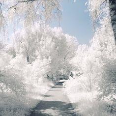 Wonderful White Winter Dreams