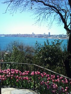 Flowers, tulips in istanbul Turkish Delight, Saudi Arabia, Middle East, Illusions, Traveling, Houses, Mountains, Beautiful, History