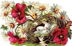 Oblaten Glanzbild scrap die cut chromo Vogel Nest  14,3  Ei egg  Blüte  blossom