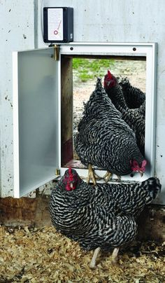By Gail DamerowAn automatic door is indispensable if you're not always there to let your chickens out in the morning and close them in at night to secure t