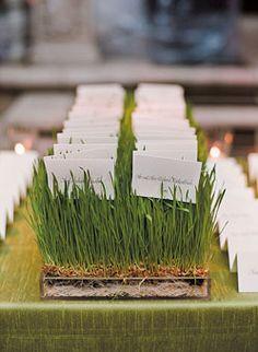 Escort cards  trays of wheatgrass.