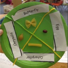 Life cycle of caterpillar to butterfly using pasta