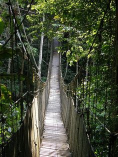 Visiting the Amazon/Canopy Walk interests me since the nature that exists in the Amazon is so far from civilization, which is a rarity these days. The animals that live in the Amazon are also very interesting creatures.
