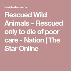 Rescued Wild Animals – Rescued only to die of poor care - Nation   The Star Online