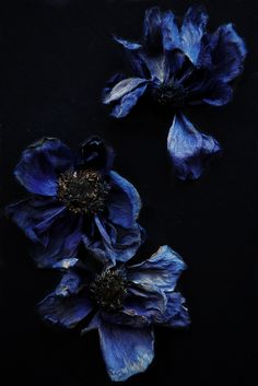 ❈ Fleurs Foncées ❈ dark art photography flowers & botanical prints - indigo