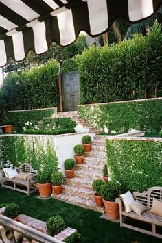 boxwoods, brick and ivy covered walls
