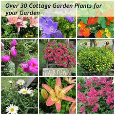 Organized Clutter - Over 30 plants I used in my cottage garden and why!