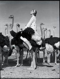 Glamorous Ostrich Riding: Norman Parkinson for Vogue, 1954, Africa