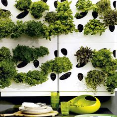 Modern herb wall garden: You'd never need store bought herbs again!