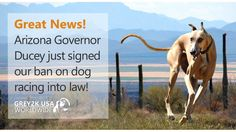 Today, I bring you fantastic news that the Grand Canyon State has just become the 40th state to prohibit dog racing!  Thanks to everyone who signed this petition, contacted their lawmakers and helped pass the Greyhound Protection Act of Arizona.   Read more here at http://www.grey2kusa.org/eNEWS/G2K-051316.html and then retweet our thanks to Governor Ducey: http://g2kww.org/25mDwNO