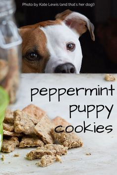 DIY Peppermint Puppy Cookies made with whole grains, fruit. These will leave your dog's breath minty fresh!