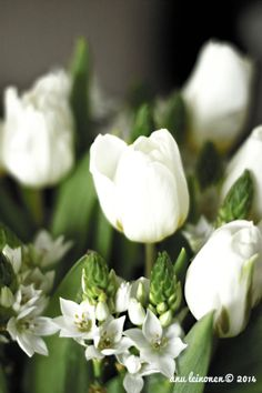 Four Flower Vase -rakkaudesta kukkiin | Asuntomessut