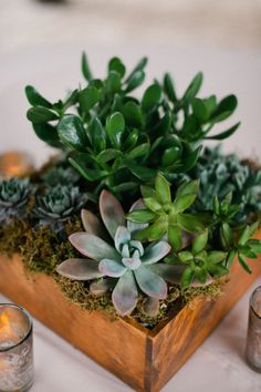 tabletop succulents in a small box