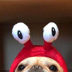 """My days as a lobster last year"", Funny French Bulldog in Lobster Costume ☀️"