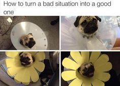 Lemons into lemonade or for our four-legged friends -- lampshade of shame into beautiful pup flower!