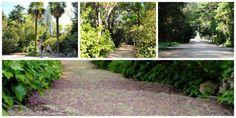 Paseos Jardines Campo del Moro