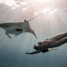 Woman swimming with a Manta Ray. Amazing Instagram Animal and wildlife Photos.  At https://peoplefinder.io we help you integrate Instagram and Pinterest so you can find and save instagram content for direct to your Pinterest boards.